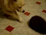 Собака и ёжик + кафель